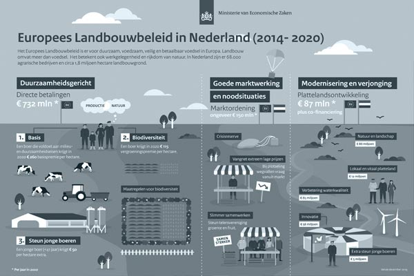 Visueel faciliteren: Infographic